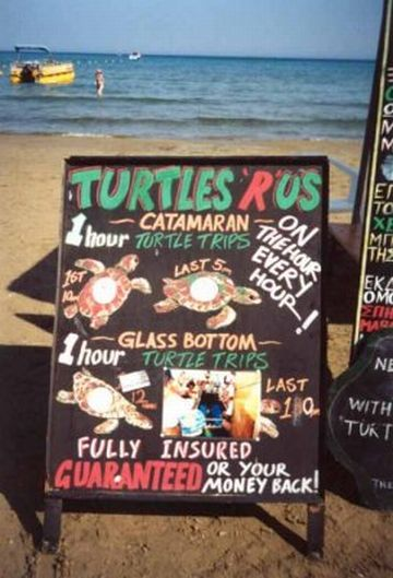 Turtle watching trips - big business! (16/06/01)