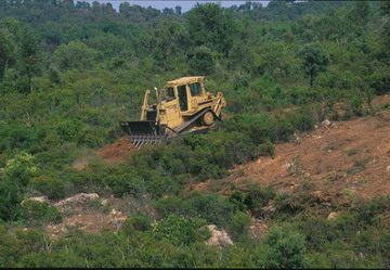 Photo 2. Destruction of habitat by mechanical land clearance.