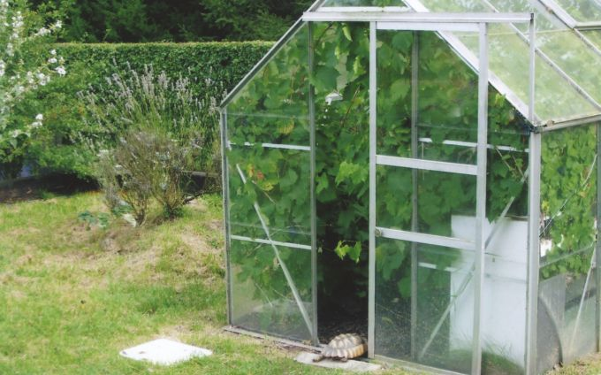 Fig. 6. Unheated greenhouse with a grapevine that is browsed by the occupants.
