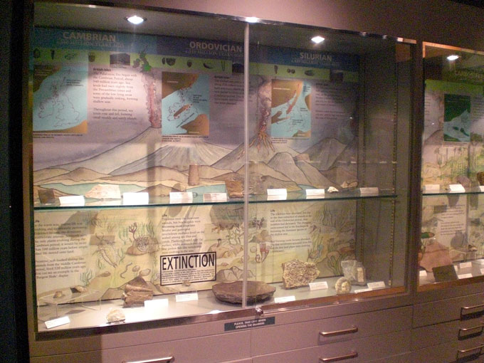 Fig. 2. The time line display at Haslemere Educational Museum showing the early part of life on Earth.