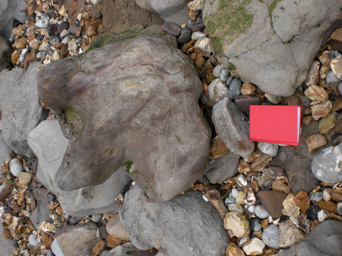 Fig. 5. Cast of a dinosaur footprint at Hanover Point, Isle of Wight, with field notebook 15x10cms for scale.