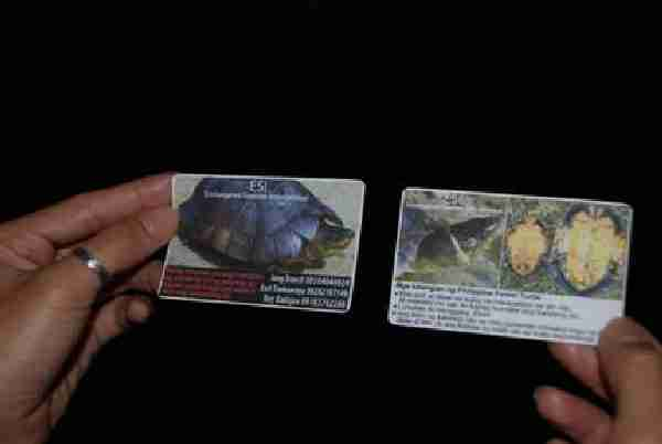 Fig. 2. Identification cards distributed to local communities to strengthen the search for the Philippine forest turtle in the wild.